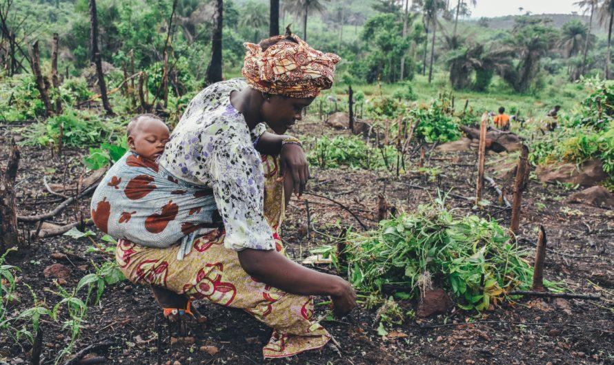 V Africe se otevírají nové možnosti investic.